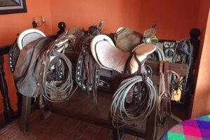 Chiapas is horses