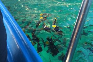 snorkeling in vallarta