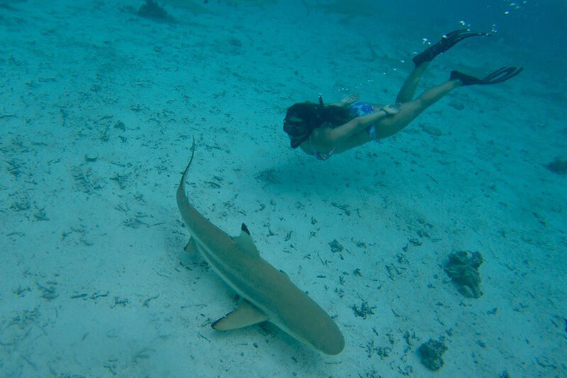 snorkeling sea of cortez