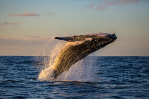 whale watching in sea of cortez